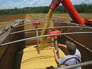 Graduate student Chris Wilhelmi positions one of the monitoring probes as grain is being loaded into a truck.