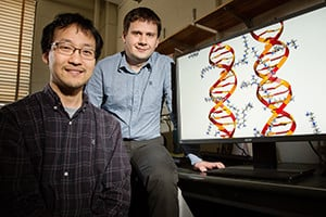 Illinois postdoctoral researcher Jejoong Yoo, left, and professor Aleksei Aksimentiev found that molecules of DNA directly interact with each other based on their sequences.