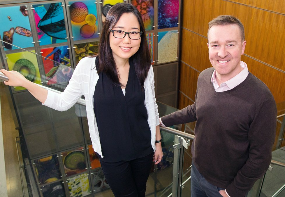 Study: Changing the environment within bone marrow alters blood cell development