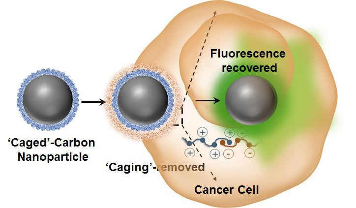 Luminescence switchable carbon nanodots follow intracellular trafficking and drug delivery